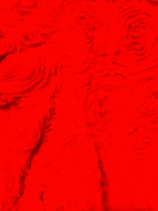 img_0652-224x300 dans Veste